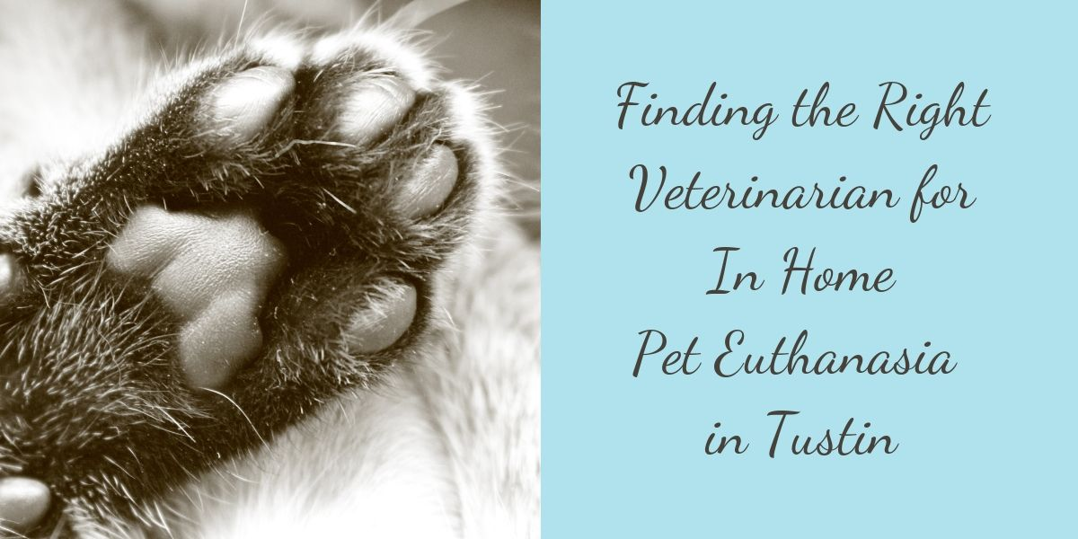 In Home Pet Euthanasia in Tustin