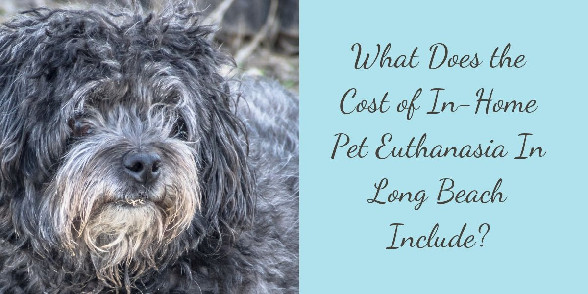 In-Home Pet Euthanasia In Long Beach