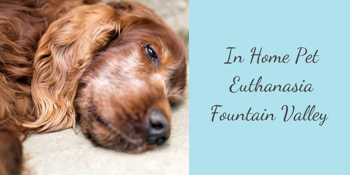 In-Home-Pet-Euthanasia-Fountain-Valley