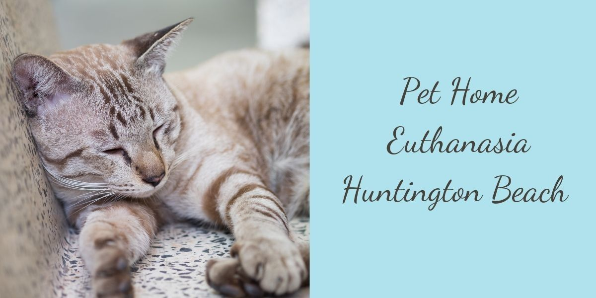 Pet-Home-Euthanasia-Huntington-Beach