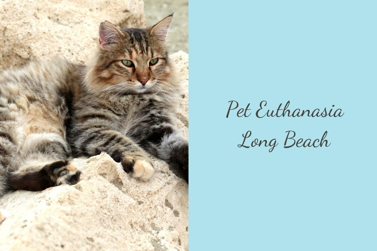Pet-Euthanasia-Long-Beach
