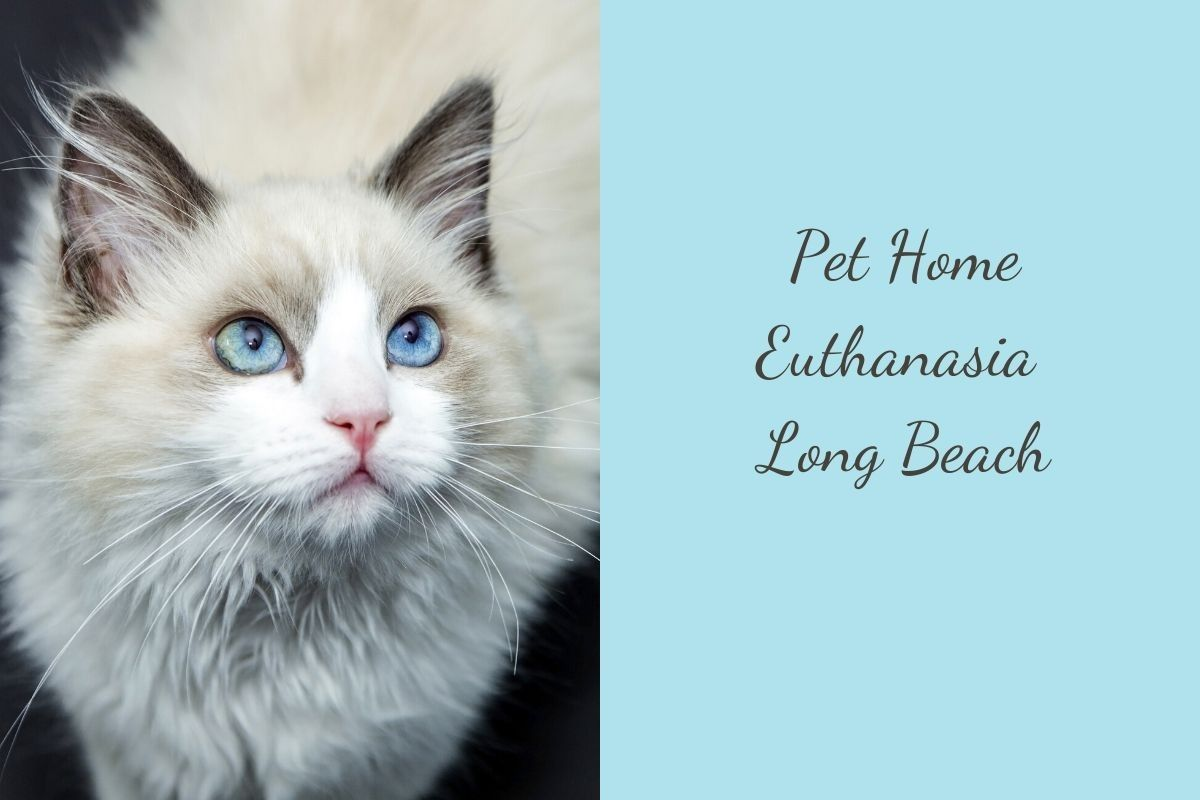 Pet-Home-Euthanasia-Long-Beach