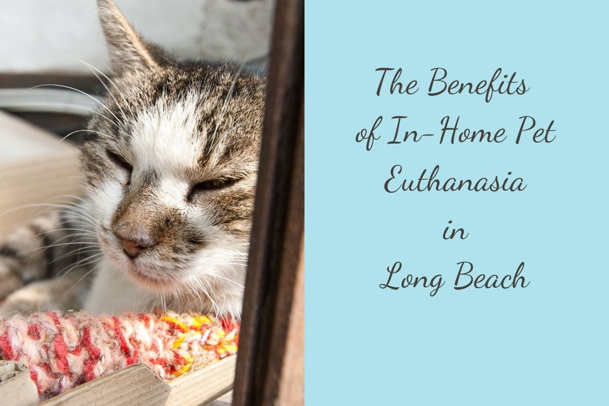The-Benefits-of-In-Home-Pet-Euthanasia-in-Long-Beach