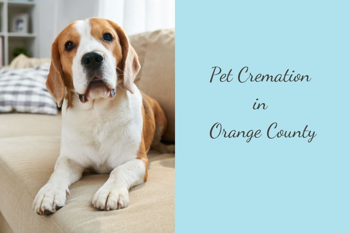 Pet-Cremation-in-Orange-County-