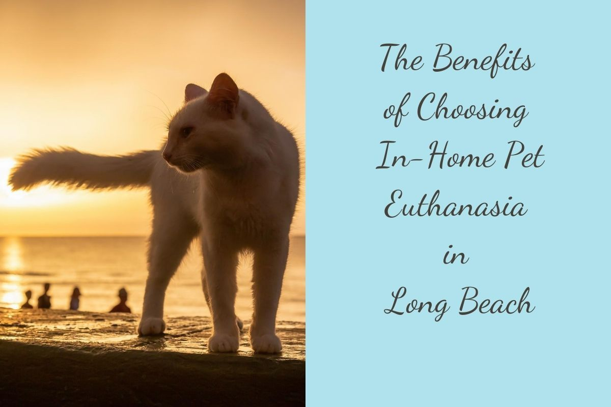 The-Benefits-of-Choosing-In-Home-Pet-Euthanasia-in-Long-Beach-