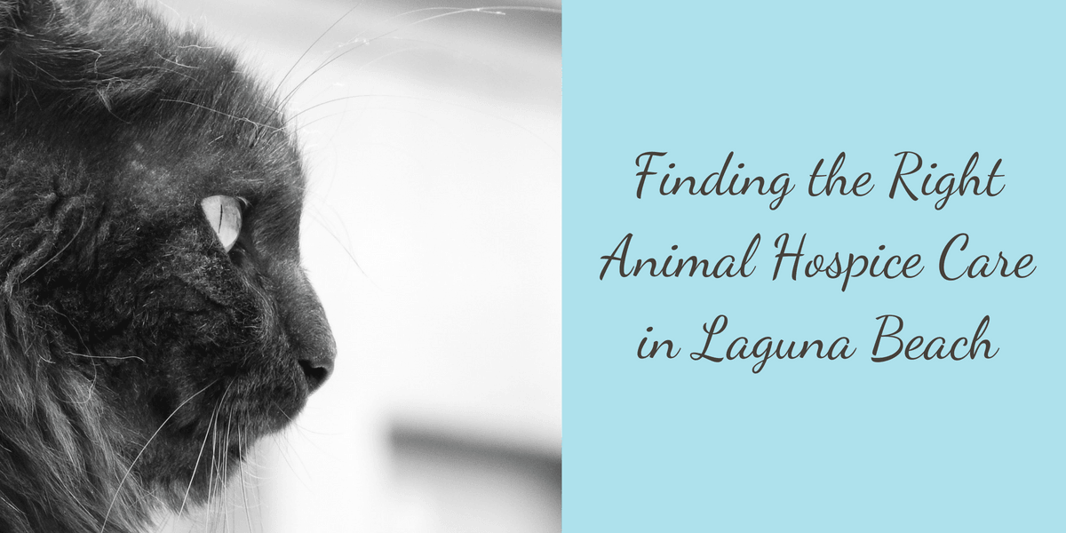 Finding-the-Right-Animal-Hospice-Care-in-Laguna-Beach