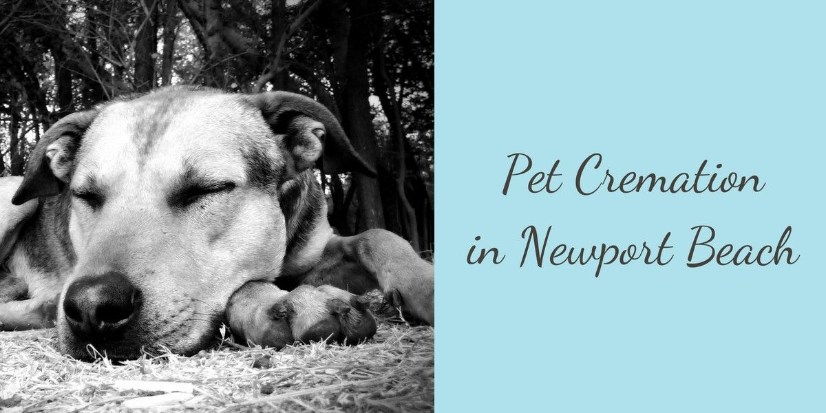 Pet-Cremation-in-Newport-Beach