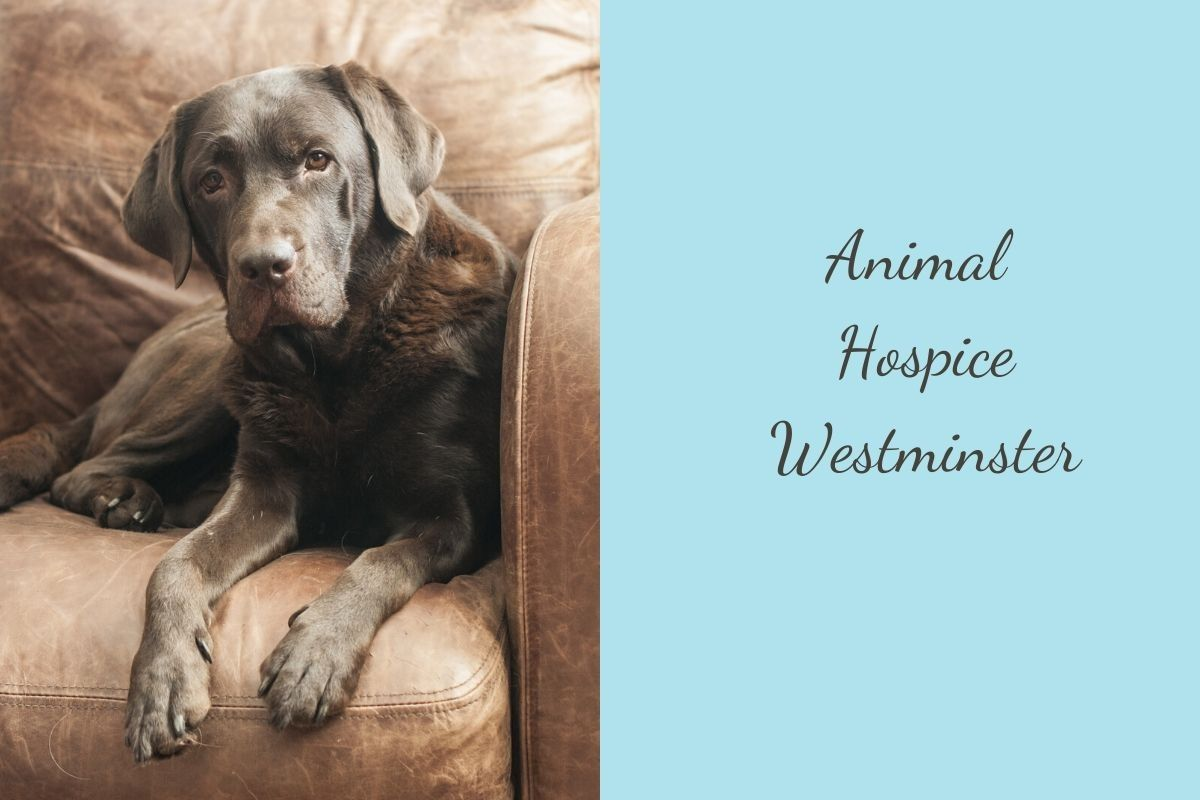 Animal-Hospice-Westminster