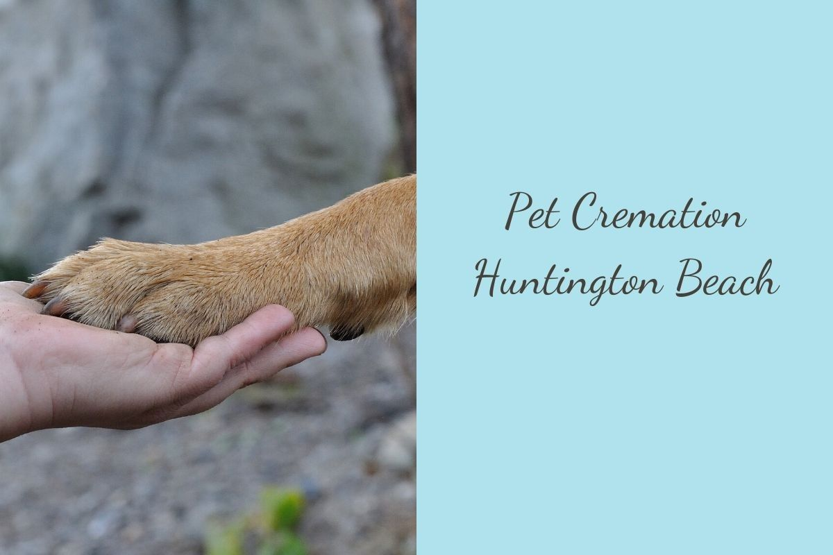 Pet-Cremation-Huntington-Beach